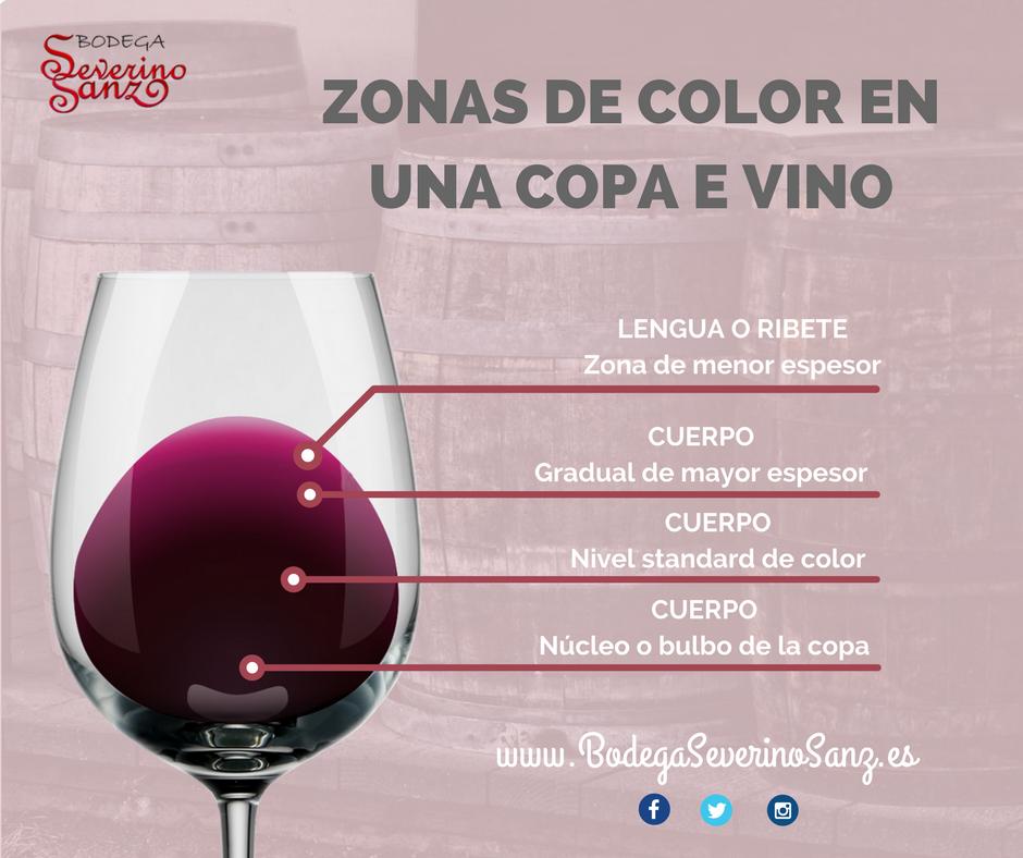 zonas de color de una copa de vino-bodegas severino